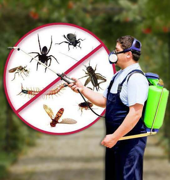 Best Pest Control Services in Gurgaon