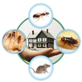 All In One Pest Control India. Best Pest Control Services in Delhi-NCR-Gurgaon-Faridabad-Noida